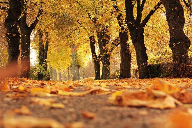 alley-autumn-autumn-colours-235721